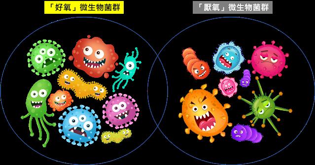 化糞池微生物